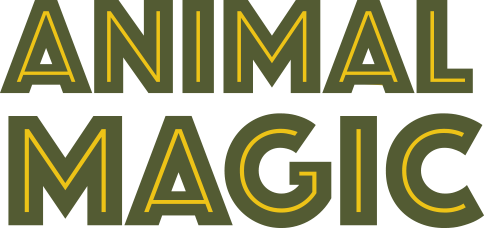 Animal Magic Wildlife Displays
