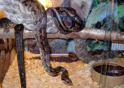 snakes_roadshow